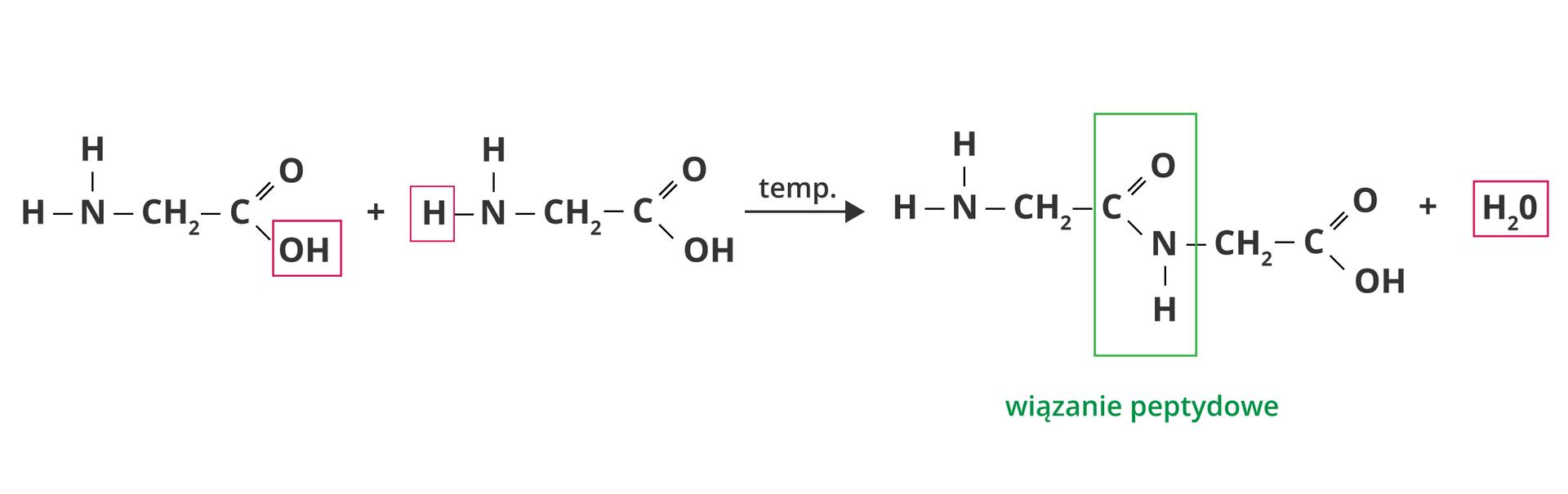Łączenie się dwóch cząsteczek glicyny