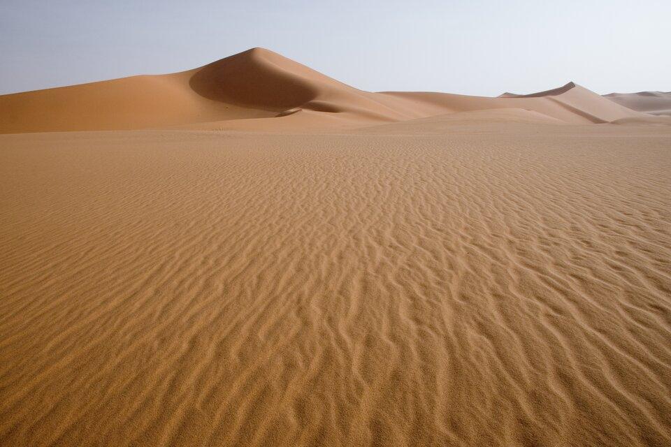Większą część obszaru Sahary pokrywają lotne piaski, na których nie rozwija się żadna roślinność