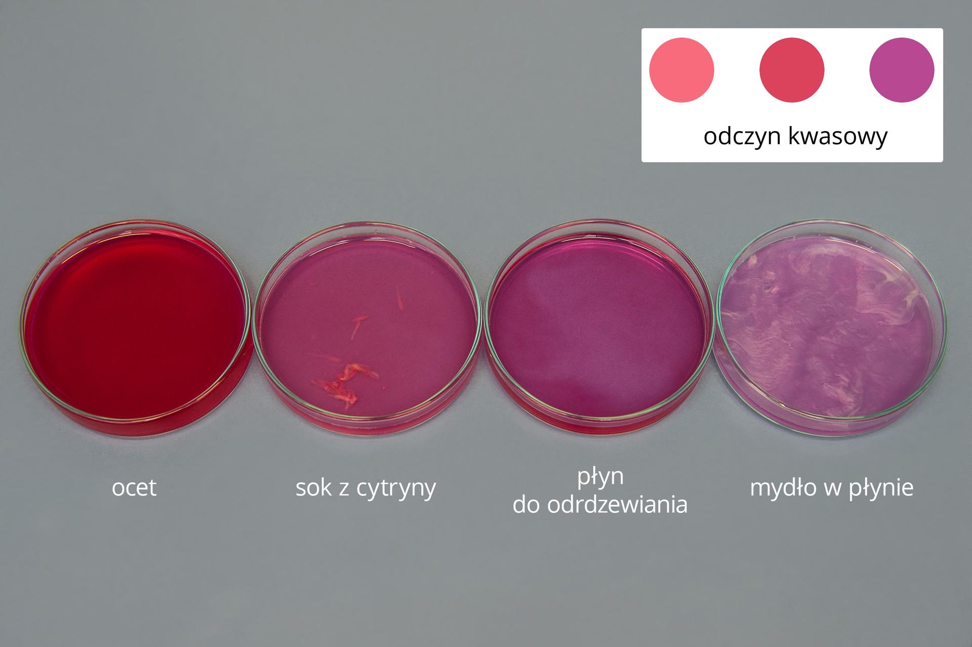 Zdjęcie drugie galerii. Przedstawia zbliżenie na cztery szalki. Ich podpisy to, licząc od lewej: ocet, sok zcytryny, płyn do odrdzewiania oraz mydło wpłynie. Do wszystkich szalek dodany został wskaźnik, wywar zczerwonej kapusty, dlatego też zawartość wszystkich ma kolor przechodzący stopniowo od intensywnie czerwonego wprzypadku octu, do purpurowego dla mydła wpłynie. Legenda umieszczona wprawym górnym rogu informacji informuje, że takie kolory wywaru zczerwonej kapusty oznaczają odczyn kwaśny.