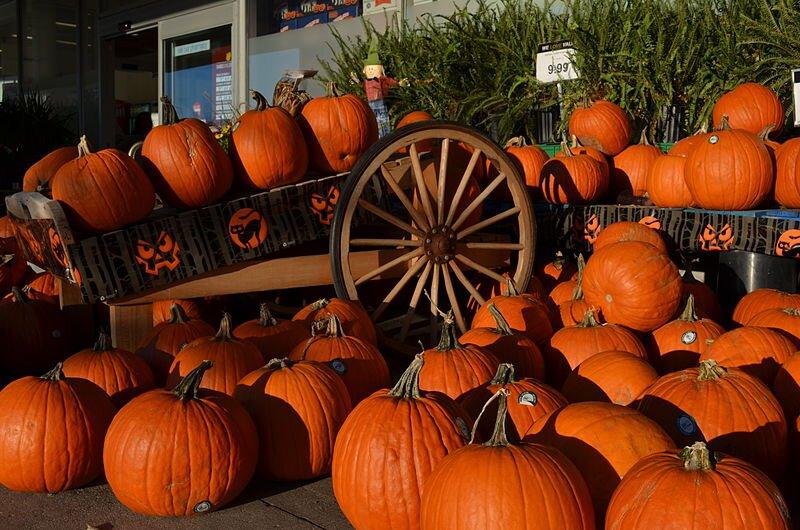 Dynie sprzedawane podczas Halloween Dynie sprzedawane podczas Halloween Źródło: fotografia barwna, domena publiczna.