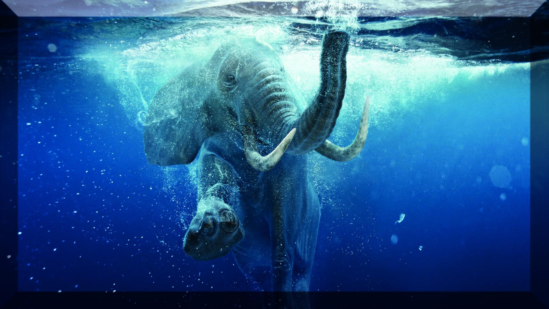Zdjęcie przedstawia słonia całkowicie zanurzonego wciemnoniebieskiej wodzie. Fotografia uchwyciła zwierzę wruchu, jakby pływało pod wodą.