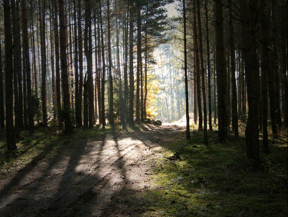 Las Las Źródło: Małgorzata Skibińska, Contentplus.pl sp. zo.o., licencja: CC BY 3.0.