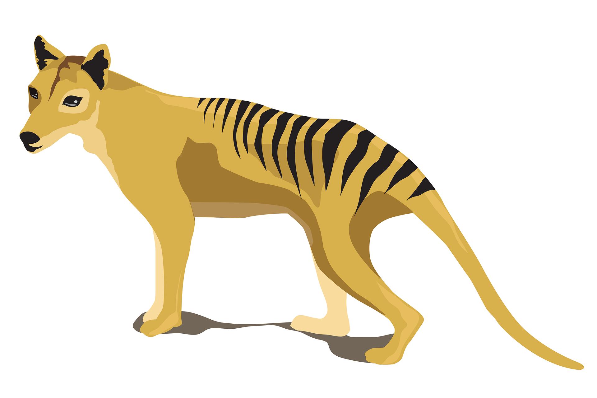 Ilustracja przedstawia sylwetkę żółto – brązowego zwierzęcia, podobnego do psa. Ma czarne pasy wtylnej części grzbietu iczarne uszy. To wymarły wilk workowaty.