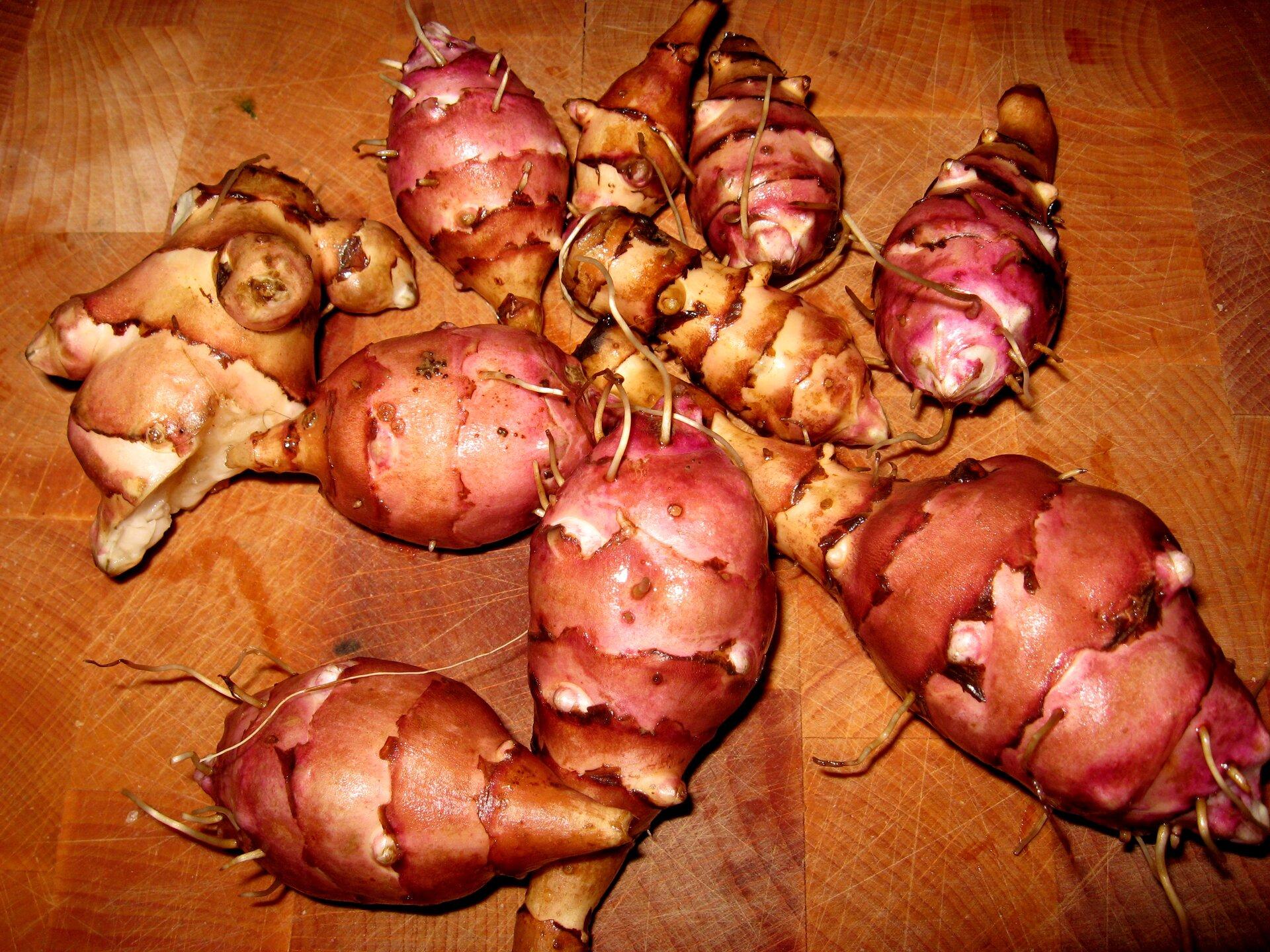 Fotografia przedstawia kilka beczułkowatych, brązowo – różowych bulw topinamburu na stole.