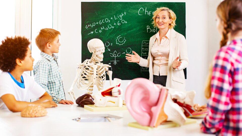 Zdjęcie przedstawia salę lekcyjną. Widać troje dzieci – dwóch chłopców ijedną dziewczynkę. Patrzą wstronę tablicy, przy której stoi nauczycielka. Prawdopodobnie jest to lekcja biologii. Można to wywnioskować po tym, że na tablicy jest narysowany schemat fotosyntezy. Poza tym wsali znajduje się również sztuczny szkielet człowieka imodel ucha.