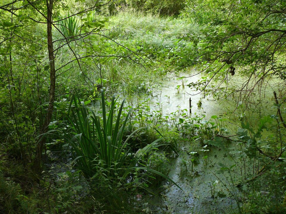 Na zdjęciu stojąca woda porośnięta roślinnością, wwodzie rosną również drzewa.
