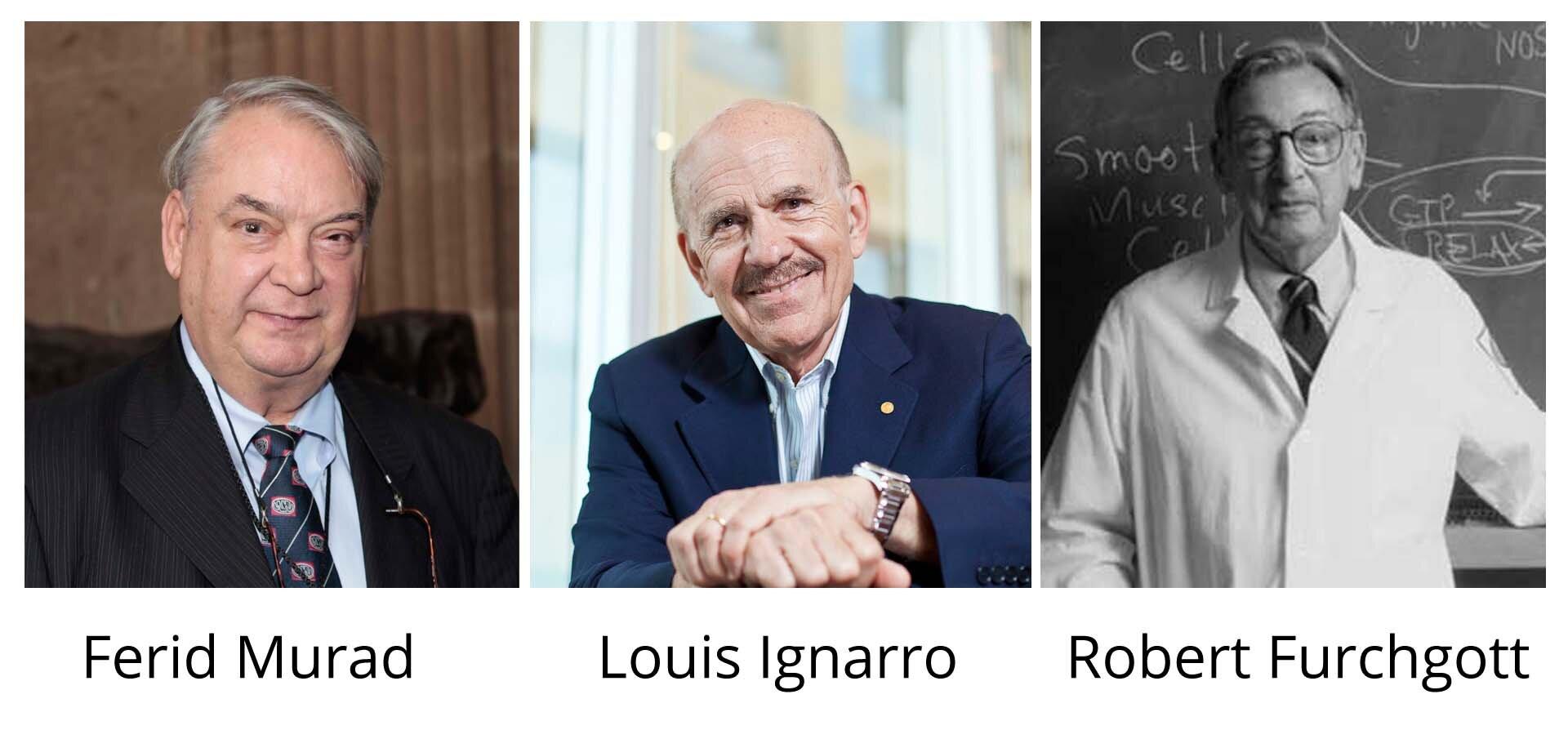 Ilustracja składa się ztrzech zdjęć przedstawiających noblistów: Ferida Murada, Louisa Ignarro iRoberta Furchgotta. Dwa pierwsze zdjęcia są kolorowe iprzedstawiają uczonych na tle neutralnym. Trzecie zdjęcie jest czarno-białe iprzedstawia Roberta Furchgotta na tle tablicy podczas wykładu.