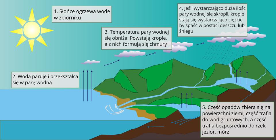 Ilustracja przedstawia obieg wody wprzyrodzie. Wdolnej części ilustracji widoczny jest zróżnicowany teren oraz zbiorniki wodne. Po prawej stronie teren nizinny, wyżyny igóry. Na górze ilustracji niebo. Po lewej stronie żółte słońce zpromieniami skierowanymi wkierunku oceanu. Efekt nagrzanej wody jest przedstawiony na prawo od słońca. Niebieski faliste linie unoszą się od strony powierzchni oceanu wkierunku nieba. Woda paruje. Powyżej białe nierówne owalne obiekty. To para wodna. Krople wody pary wodnej tworzą chmury. Białe chmury narysowane są na prawo od pary wodnej. Para wodna skrapla się. Pod chmurami symboliczne drobne krople deszczu. Para wodna przedstawiona jest też jako opady śniegu nad szczytami gór. Góry pokryte są śniegiem. Poniżej gór znajduje się niebieskie szerokie pasmo. To woda spływająca zwyższych terenów do oceanu. Pozostała część wody zbiera się wzbiorniku wodnym upodnóża gór. Część wody trafia głębiej. Niebieskie strzałki skierowane wdół. Poniżej strzałek zbiornik wody. To zgromadzone wody gruntowe.