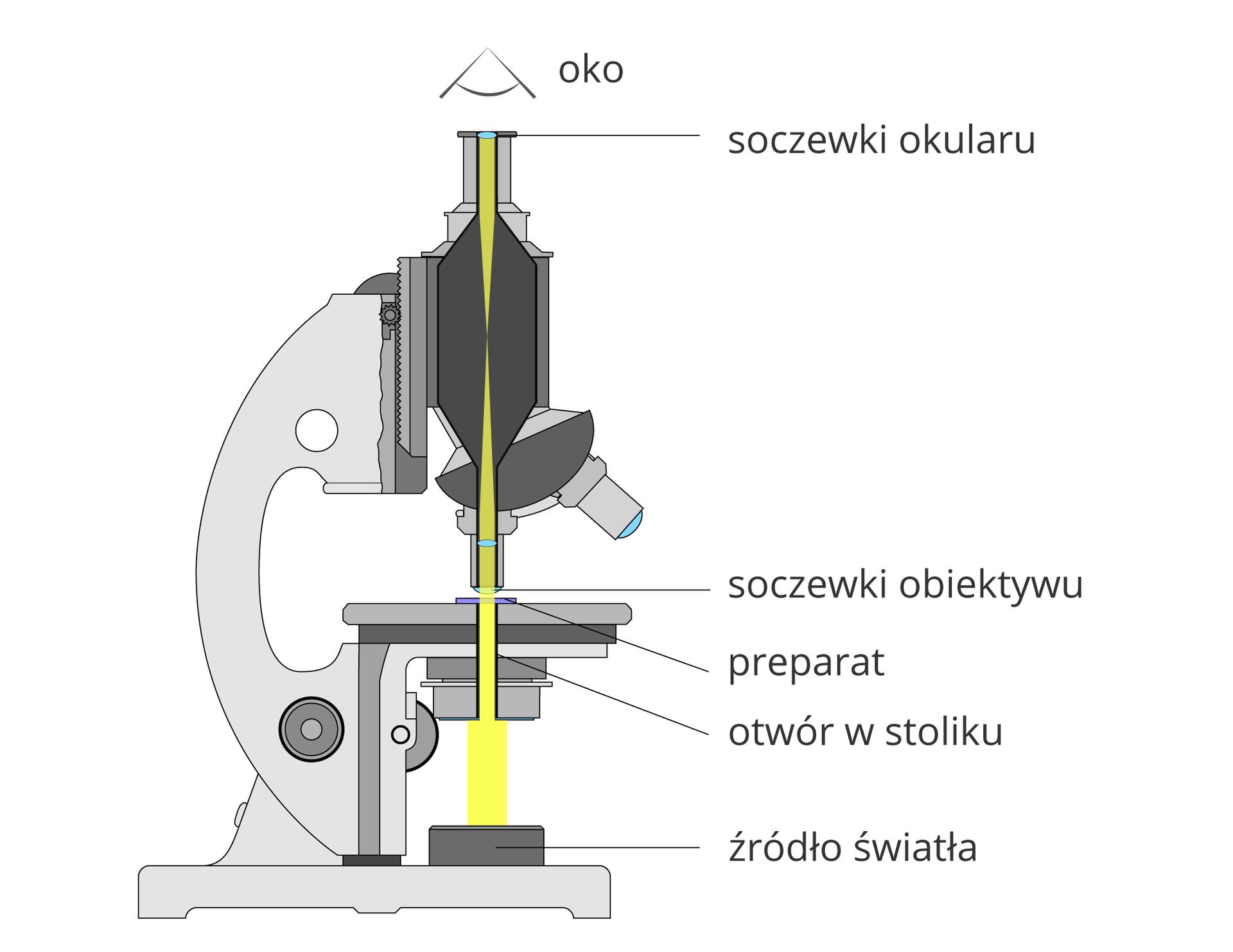 Ilustracja przedstawia przekrój pionowy przez mikroskop. Przez części optyczne wkolorze szarym biegnie żółty pasek, pokazujący drogę światła do ludzkiego oka, znajdującego się nad mikroskopem.