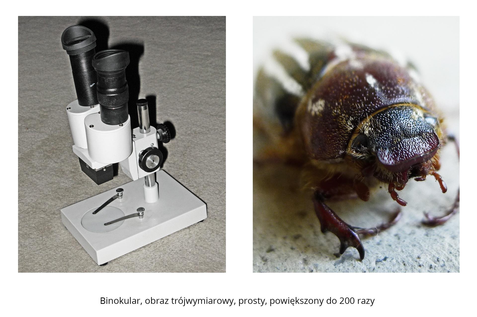 Galeria składa się ztrzech fotografii. Druga fotografia składa się zdwóch części. Lewa przedstawia binokular, podobny do mikroskopu. Prawa część przedstawia powiększoną 200 razy głowę chrabąszcza.