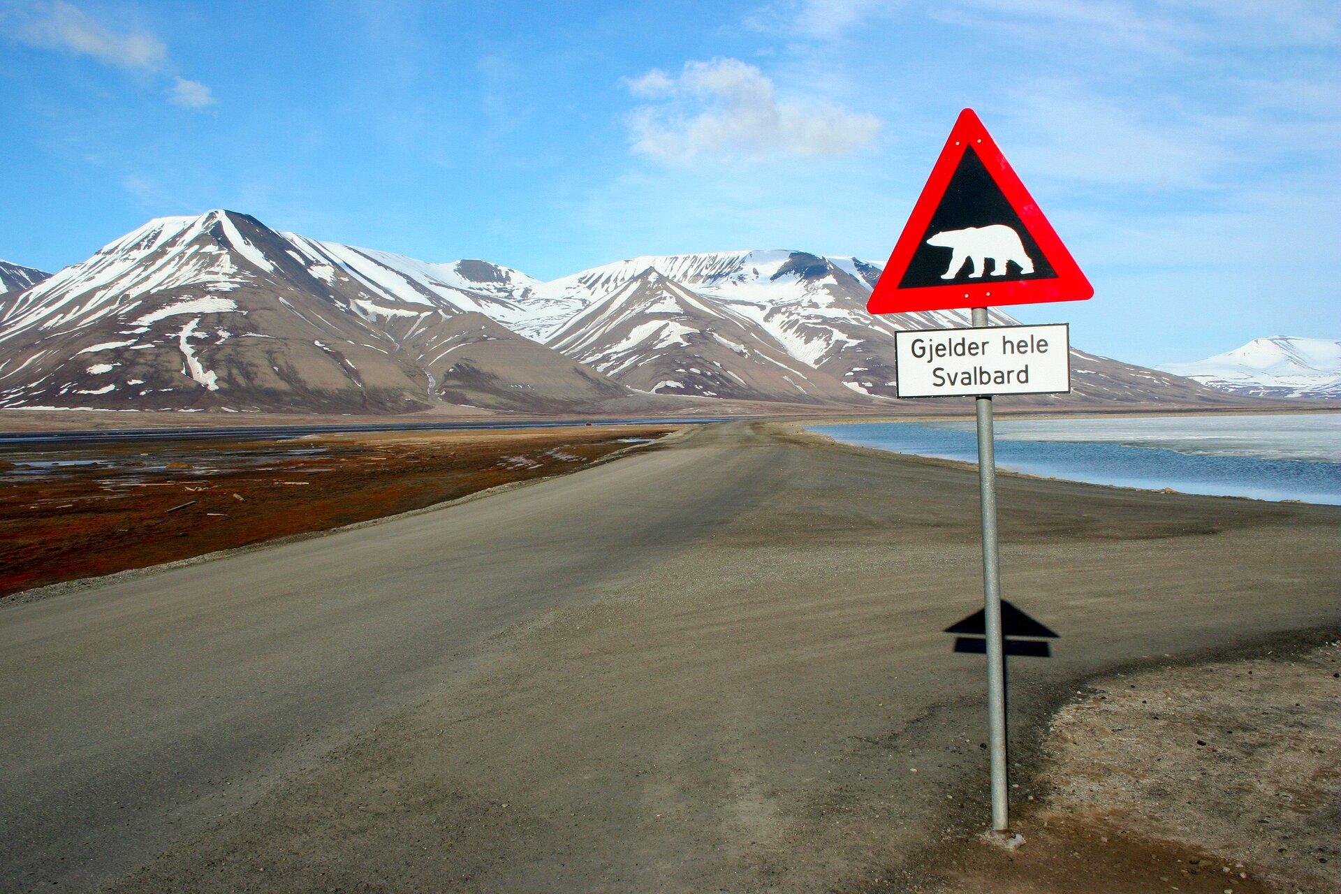 Na zdjęciu droga gruntowa, znak drogowy uwaga niedźwiedzie. Wtle brzeg morza, wysokie skaliste, ośnieżone góry.
