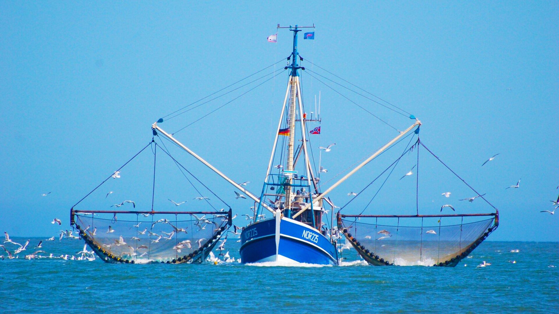 Zdjęcie przedstawia statek rybacki, zajmujący się połowem ryb na morzu. Wokół statku latają mewy. Na statku powiewają flagi, między innymi Norwegii iNiemiec. Statek ma kolor niebieski. Widnieje na nim napis: NOR225, co oznacza, że prawdopodobnie pływa pod norweską banderą. Jest piękny, słoneczny dzień, amorze jest spokojne. Woda ma lazurowy kolor.