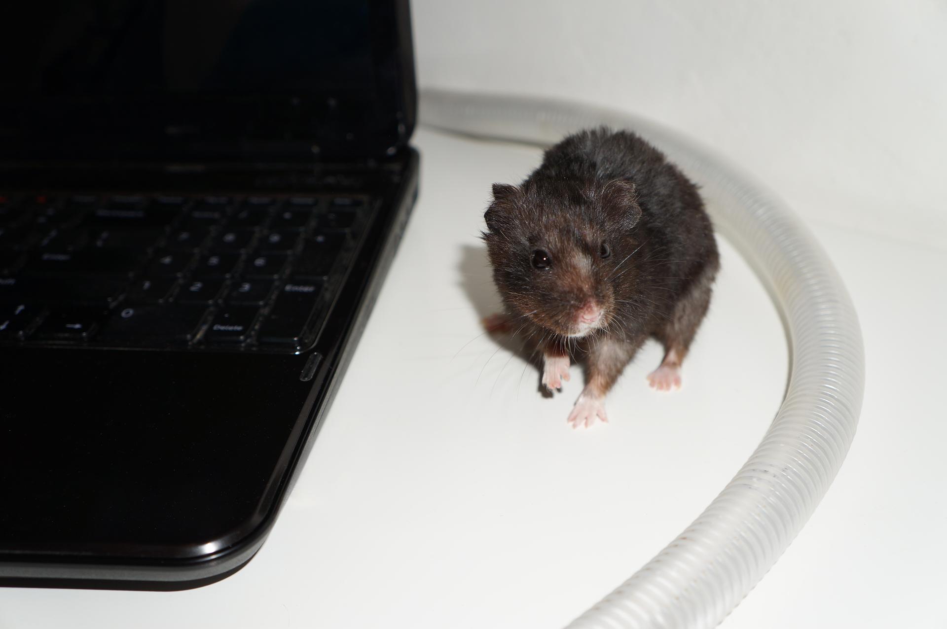 Fotografia przedstawia komputer przenośny zodchodzącym od niego kablem zabezpieczonym za pomocą plastikowej osłonki. Obok zabezpieczonego kabla siedzi mysz.