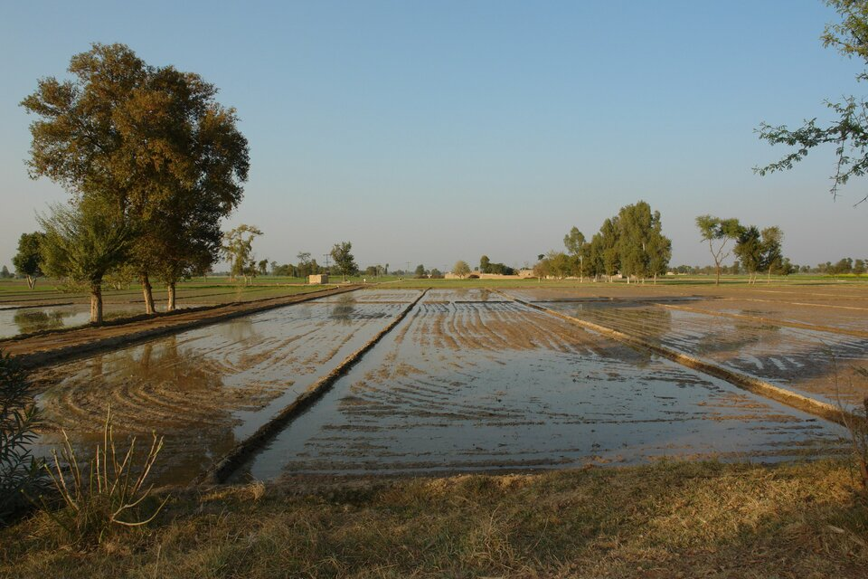 Wody Indusu od tysiącleci służą do nawadniania użytków rolnych wdolinie tej rzeki