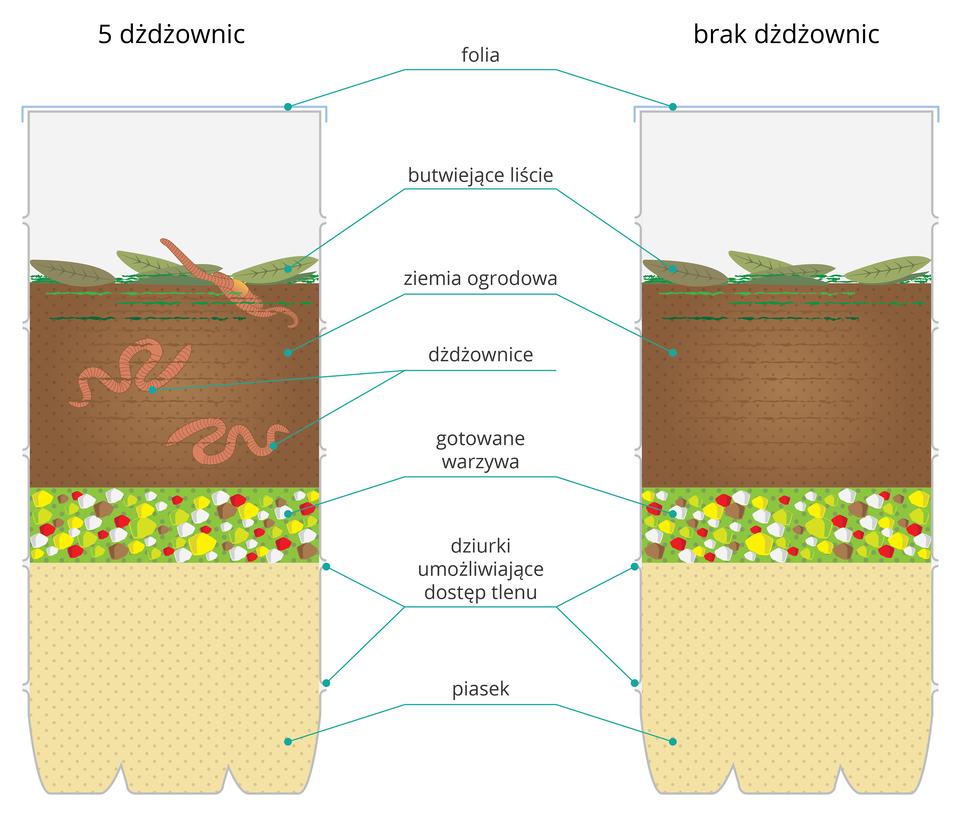 Ilustracja prezentuje dwa stojące obok siebie pojemniki wypełnione kolejno: piaskiem, gotowanymi warzywami, ziemią ogrodową oraz butwiejącymi liśćmi. Oba pojemniki są przykryte folią. Wpojemniki po lewej stronie umieszczono pięć dżdżownic.