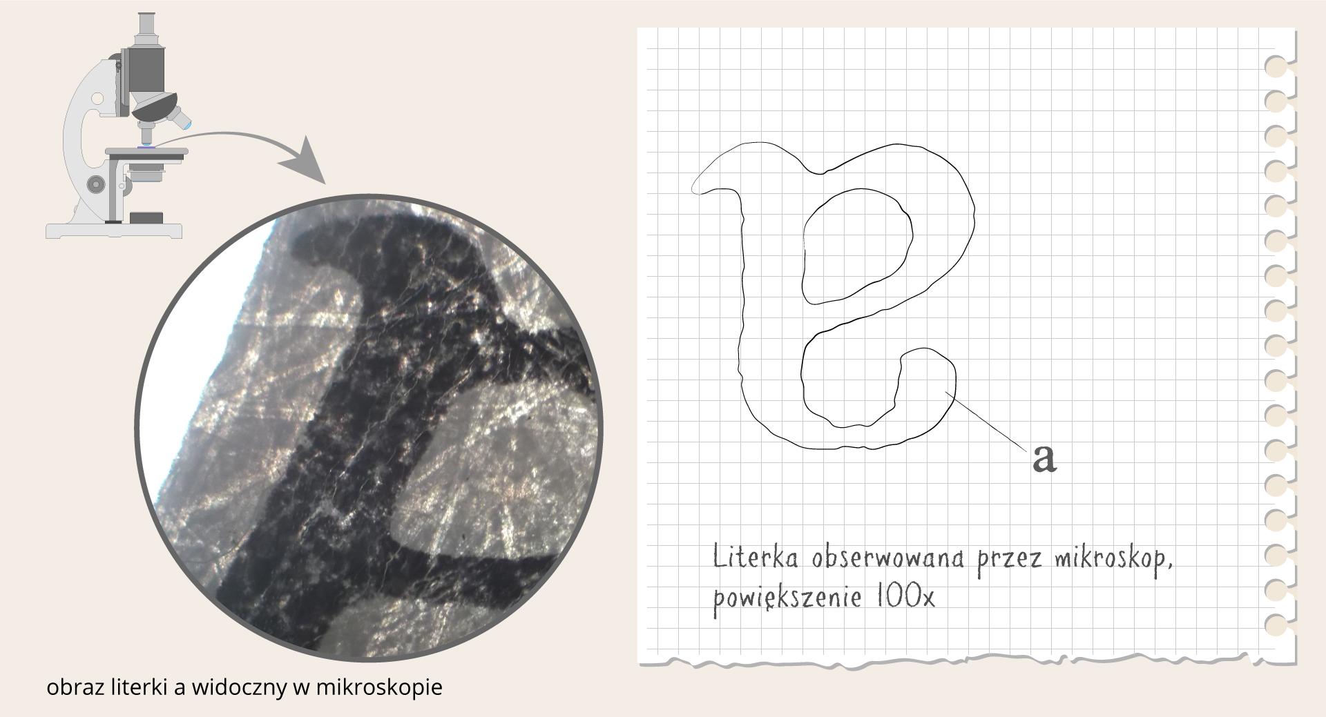Galeria składa się zdwóch ilustracji. Każda znich jest podzielona na dwie części. Pierwsza czarno – biała ilustracja po lewej przedstawia mikroskop oraz odwrócony ipowiększony obraz literki a. Po prawej na kartce zzeszytu znajduje się rysunek obserwowanej litery wpowiększeniu sto razy.