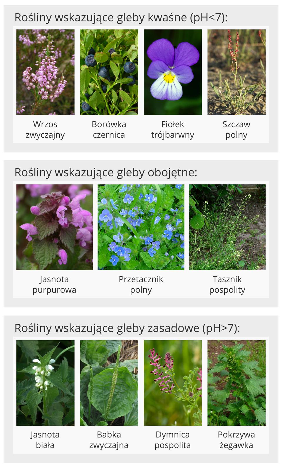 Przykłady roślin wskaźnikowych gleb oróżnej kwasowości