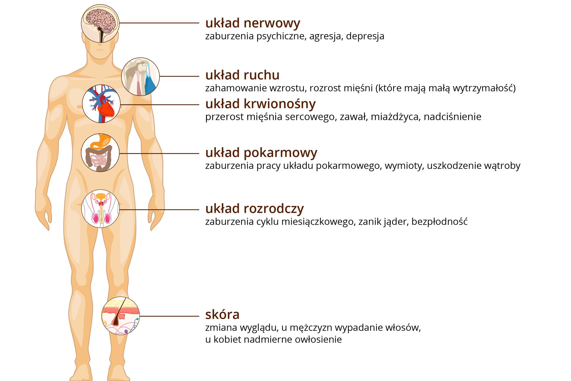 Ilustracja przedstawia pomarańczowa sylwetkę stojącego mężczyzny. Wodpowiednich miejscach wrysowano powiększenia narządów, na które wpływa doping. Od góry: rysunek mózgu, opis: układ nerwowy – zaburzenia psychiczne, agresja, depresja. Niżej staw barkowy, podpis: układ ruchu – zahamowanie wzrostu, rozrost mięśni. Wklatce piersiowej rysunek serca, podpis: układ krwionośny – przerost mięśnia sercowego, zawał, miażdżyca, nadciśnienie. Wbrzuchu fragment jelit, podpis: układ pokarmowy – zaburzenia pracy, wymioty, uszkodzenie wątroby. Niżej różowy schemat układu rozrodczego ipodpis – zaburzenia cyklu miesiączkowego, zanik jąder, bezpłodność. Na nodze rysunek przekroju przez skórę zwłosem, podpis: skóra – umężczyzn wypadanie włosów, ukobiet nadmierne owłosienie.