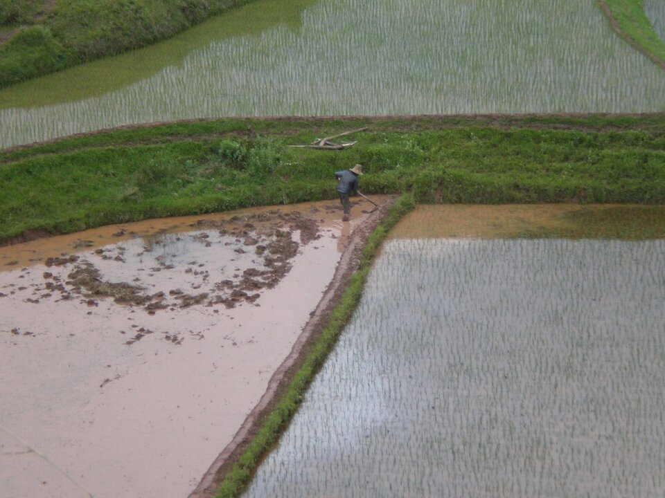 Wdolinie chińskiej rzeki Jangcy tak jak przed wiekami uprawiany jest ryż