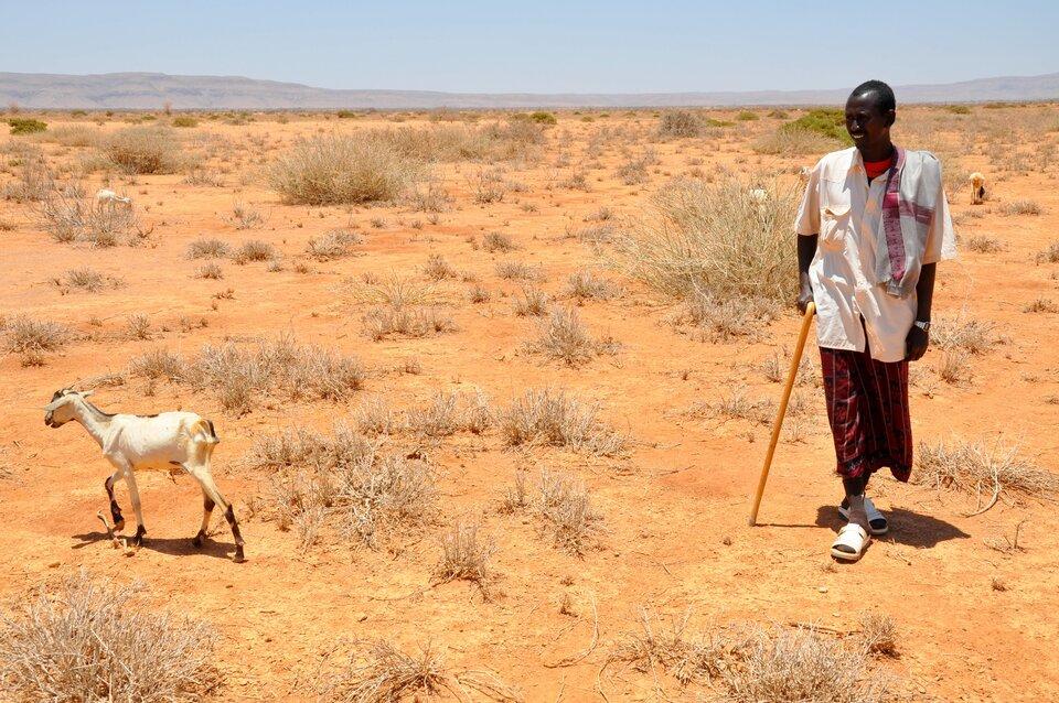 Na zdjęciu pasterz zkozą na pustynnej ziemi, kępy suchych traw.