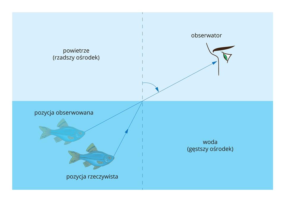 Ilustracja pokazuje wjaki sposób załamują się promienie świetlne przy przejściu ze środowiska odużej gęstości (wody) do środowiska omniejszej gęstości (powietrze). Następuje tutaj zmiana kąta załamania promieni świetlnych, wtaki sposób, że ryba którą obserwujemy wydaje się płynąć płycej niż jest wrzeczywistości.