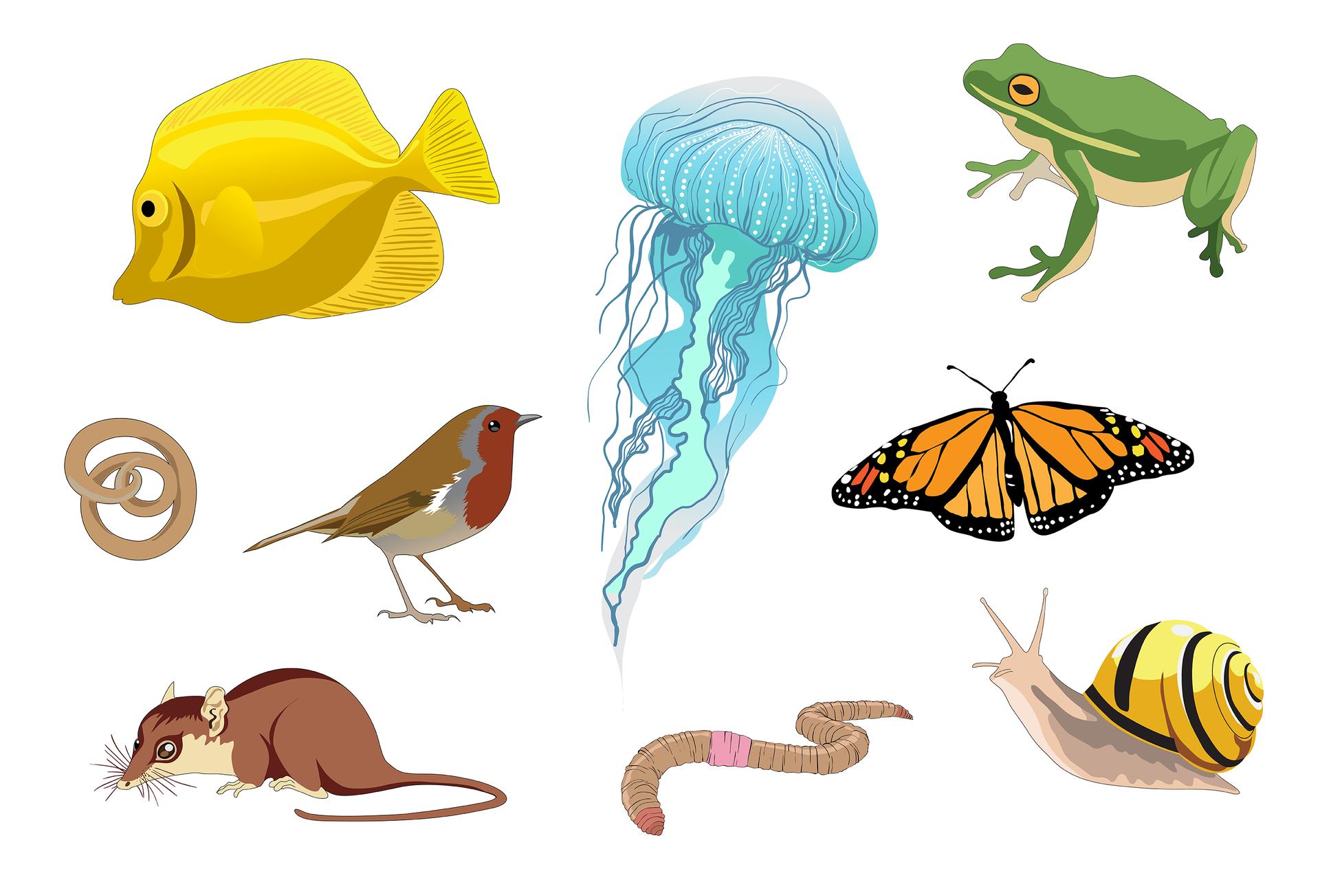 Ilustracja przedstawia kolorowe sylwetki dziewięciu zwierząt wtrzech rzędach. Od lewej ugóry: żółta płaska ryba zczarnym okiem zlewej. Błękitna meduza zdługimi czułkami wdół. Zielona rzekotka zpomarańczowym okiem zpoziomą źrenicą ijasnym brzuchem. Wśrodkowym rzędzie zwinięty wprecelek beżowy nicień. Obok stoi szaro – brązowy ptak zrudobrązową głową iszyją. Zprawej czarno - pomarańczowy motyl. Udoły zlewej brązowy gryzoń zwąsami czuciowymi na wydłużonym pyszczku idługim ogonem. Wśrodku pierścieniowata, beżowa dżdżownica zróżowym siodełkiem. Udołu zprawej różowo – liliowy ślimak , muszla żółta zczarnym pasem.