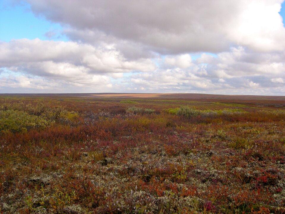 Na ilustracji tundra. Obszar bezleśny, niska pokrywa roślinna, mchy iporosty.