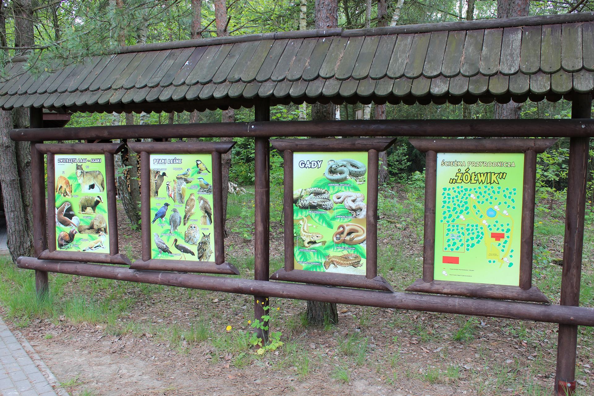 """Fotografia prezentuje cztery tablice umieszczone na ścieżce przyrodniczej, na których umieszczono informacje ożyjących tu roślinach, zwierzętach oraz mapę ścieżki przyrodniczej """"Żółwik"""""""