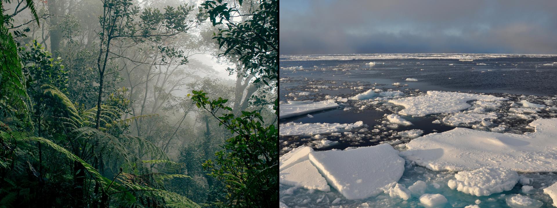 Gęsty las równikowy na Malajach wklimacie gorącym iwilgotnym; Pokryte lodem wybrzeża Oceanu Arktycznego wklimacie polarnym