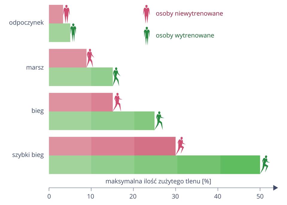 Diagram słupkowy poziomy przedstawia wydolność fizyczną podczas różnych ćwiczeń (oś Y). Wydolność osób wytrenowanych (belki isylwetki zielone) iniewytrenowanych (belki isylwetki różowe) mierzono przy pomocy maksymalnego zużycia tlenu, oznaczonego wprocentach na osi X. Porównano zużycie tlenu podczas: odpoczynku, marszu, biegu iszybkiego biegu. Wkażdej ztych aktywności zużycie tlenu osób wytrenowanych było wyższe.