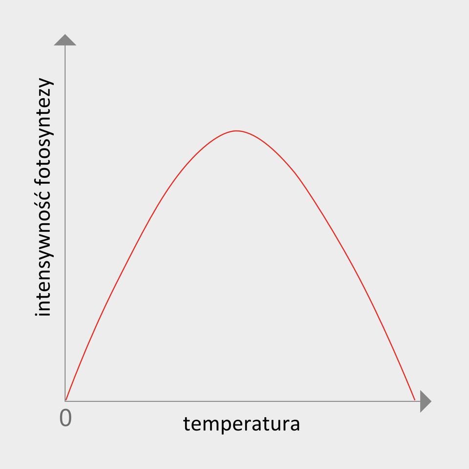 Wykres przedstawiający wpływ temperatury na intensywność fotosyntezy. Początkowo intensywność fotosyntezy rośnie wraz ze wzrostem temperatury, by po przekroczeniu wartości granicznej zacząć spadać.