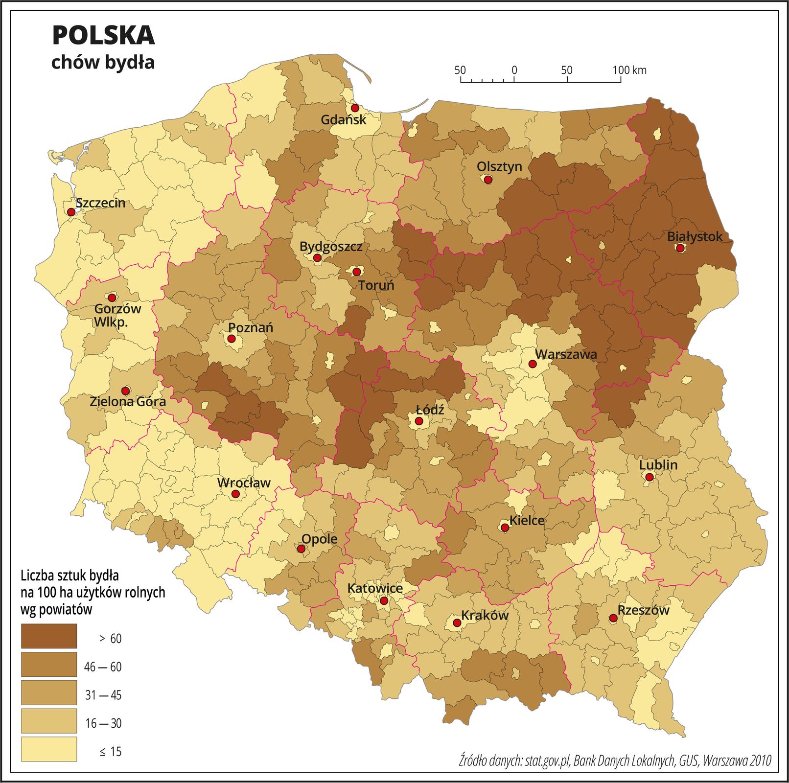 Ilustracja przedstawia mapę Polski zpodziałem na powiaty, na której za pomocą kolorów przedstawiono liczbę sztuk bydła na sto hektarów użytków rolnych wg powiatów. Na mapie czerwonymi liniami oznaczono granice województw, aczarnymi granice powiatów, czerwonymi kropkami oznaczono miasta wojewódzkie ije opisano. Najciemniejszym odcieniem koloru brązowego oznaczono obszary, gdzie występuje powyżej sześćdziesięciu sztuk bydła na sto hektarów użytków rolnych. Jest to województwo podlaskie, północna iwschodnia część województwa mazowieckiego, południowa część województwa warmińsko-mazurskiego ikilka powiatów na styku województwa wielkopolskiego iłódzkiego. Najjaśniejszym odcieniem oznaczono obszary, gdzie hoduje się poniżej piętnastu sztuk bydła na sto hektarów użytków rolnych. Jest to centralna część województwa mazowieckiego, okolice Łodzi izachodnia część Polski. Wpozostałych powiatach oznaczonych trzema różnymi odcieniami koloru brązowego przedstawiono obszary, na których hodowla bydła waha się od szesnastu do sześćdziesięciu sztuk na sto hektarów użytków rolnych. Występują one na mapie wzbliżonych ilościach isą rozłożone nierównomiernie. Poniżej mapy wlegendzie opisano kolory użyte na mapie.