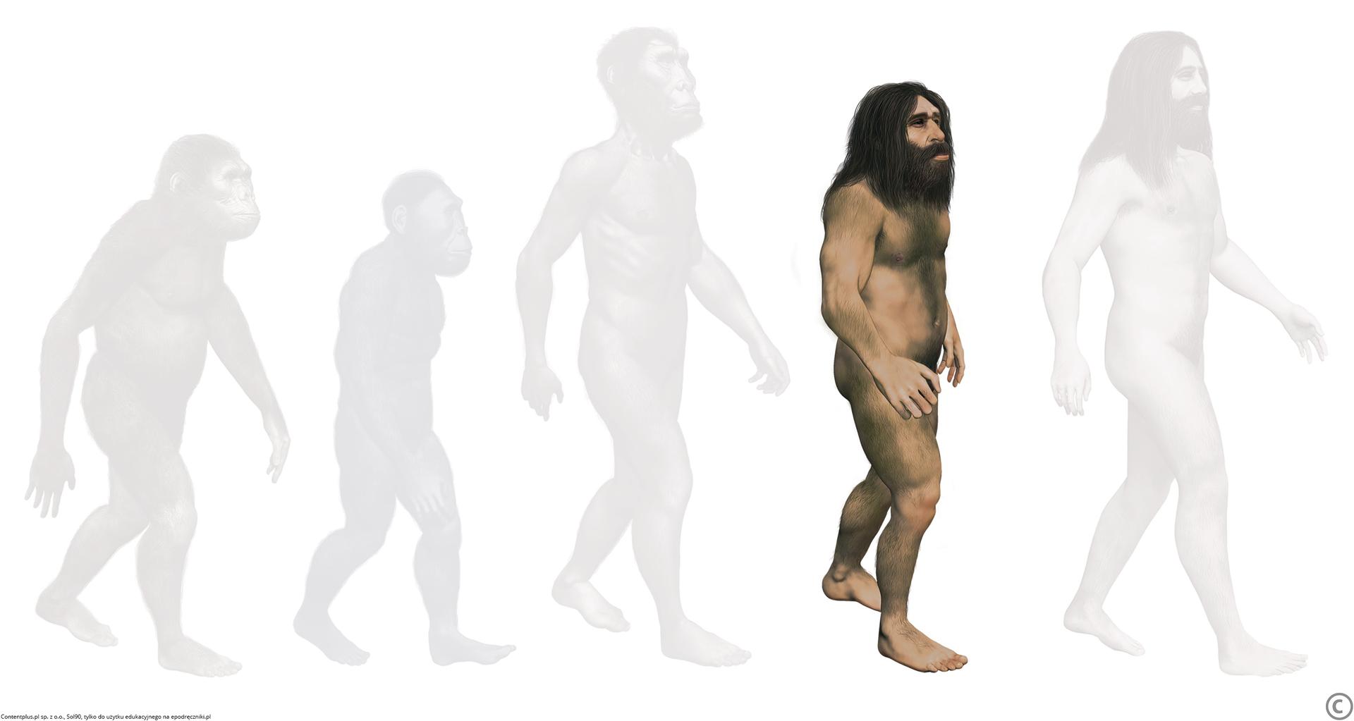 Homo neanderthalensis Homo neanderthalensis Źródło: Contentplus.pl sp. zo.o., Sol90, tylko do użytku edukacyjnego na epodreczniki.pl.