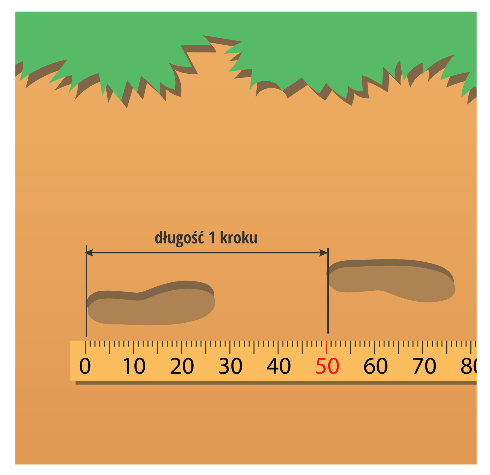 Ilustracja przedstawia drugi etap dokonywania pomiaru odległości metodą liczenia kroków: określenie długości kroku.