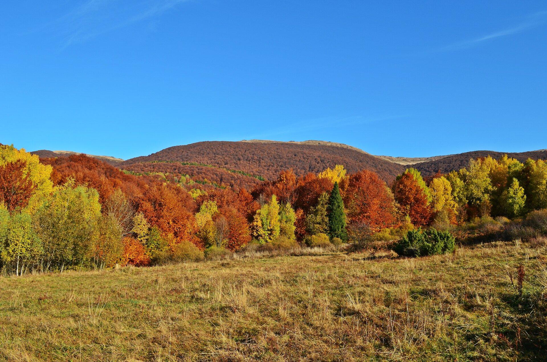 Fotografia przedstawia krajobraz klimatu umiarkowanego jesienią. Na pierwszym planie widać polanę pokrytą żółtą, wyschniętą trawą. Dalej rosną drzewa oliściach żółtych, czerwonych, brązowych izielonych. Wtle widać góry ołagodnie pochylonych stokach.