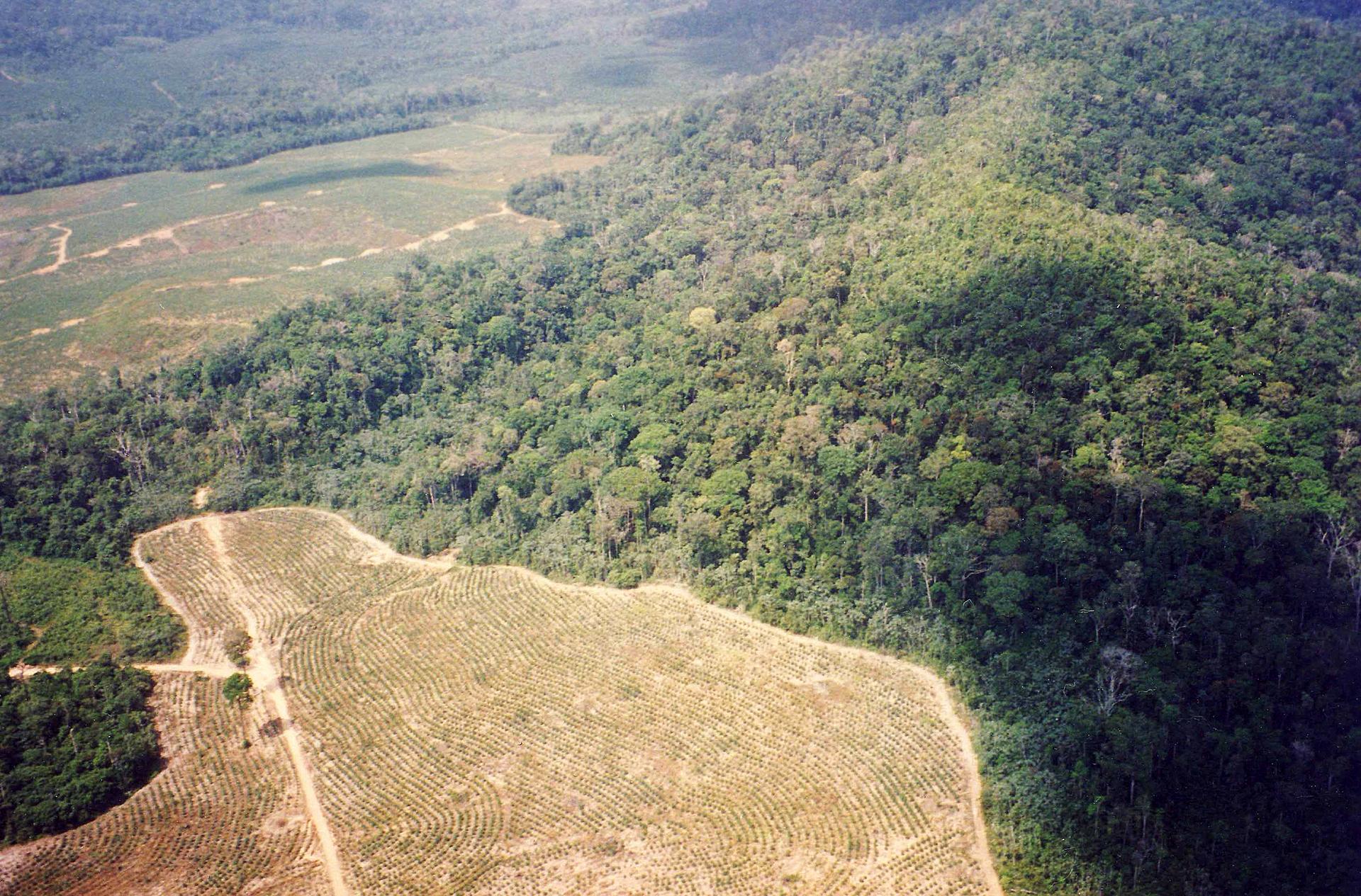 Zdjęcie lotnicze fragmentu Puszczy Amazońskiej. Zgóry widoczne wielkie połacie wyciętego lasu zamienione wpola uprawne.