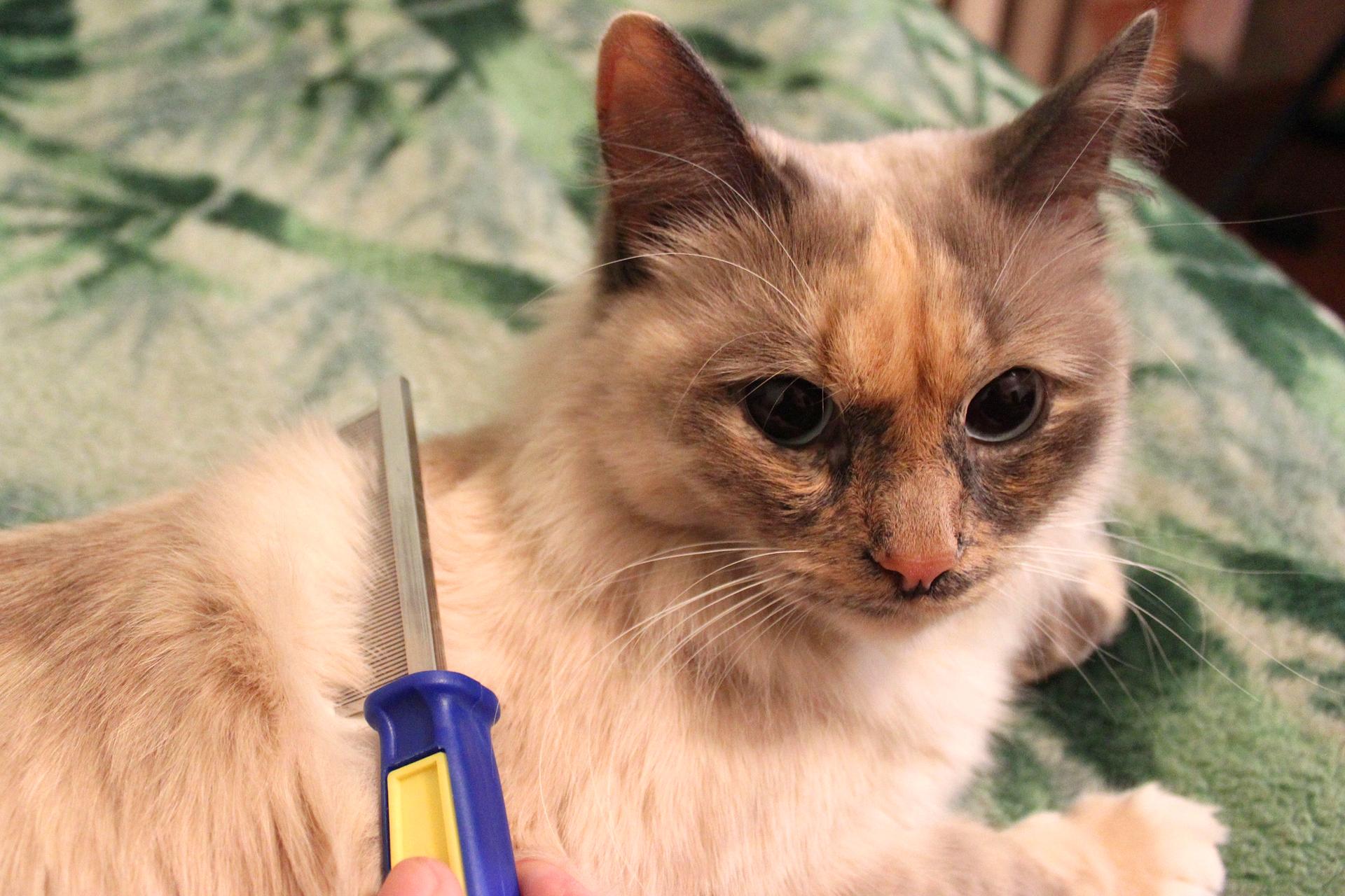 Slajd 2 – prezentuje leżącego kota długowłosego, czesanego przez właściciela.
