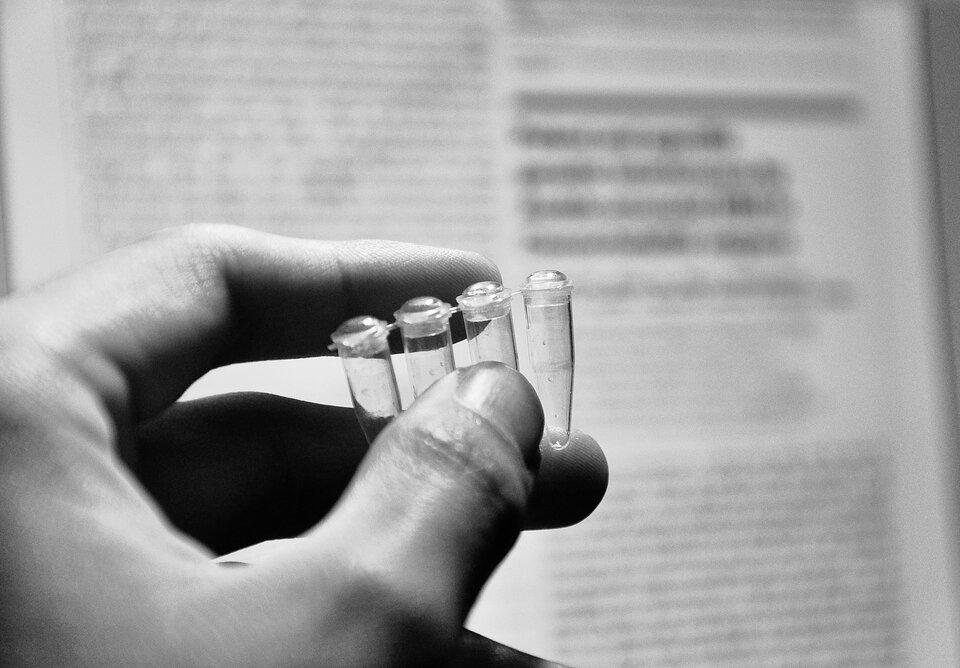 Fotografia przedstawia dłoń człowieka, który trzyma cztery małe, przezroczyste, zamykane fiolki. Wtakich probówkach można przeprowadzać reakcje inżynierii genetycznej.