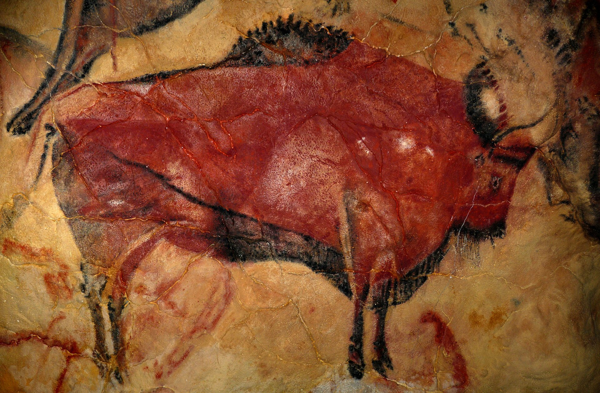 Fragment malowidła zjaskini Altamira wHiszpanii. Prawdopodobnie powstało ono ponad 15 000 lat temu. Jaskinia została odkryta pod koniec XIX wieku. Została wpisana na listę światowego dziedzictwa kultury UNESCO (międzynarodowej organizacji zajmującej się ochroną dziedzictwa kultury), co oznacza, że jest szczególnie chroniona ze względu na swoją unikalną wartość Fragment malowidła zjaskini Altamira wHiszpanii. Prawdopodobnie powstało ono ponad 15 000 lat temu. Jaskinia została odkryta pod koniec XIX wieku. Została wpisana na listę światowego dziedzictwa kultury UNESCO (międzynarodowej organizacji zajmującej się ochroną dziedzictwa kultury), co oznacza, że jest szczególnie chroniona ze względu na swoją unikalną wartość Źródło: domena publiczna.