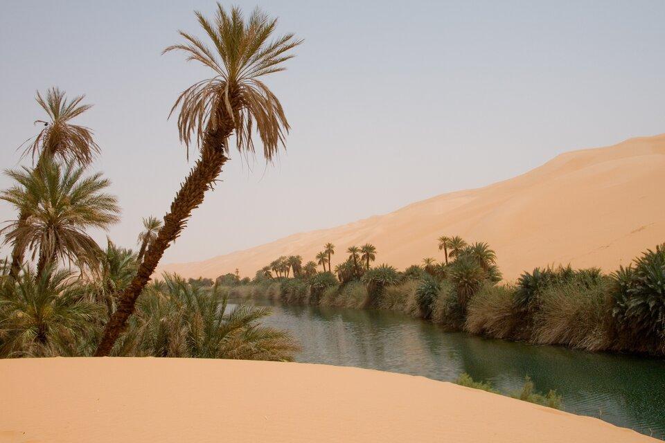 Oaza na Saharze – płytko zalegające wody gruntowe pozwalają na rozwój zielonej roślinności wwilgotnych zagłębieniach terenu