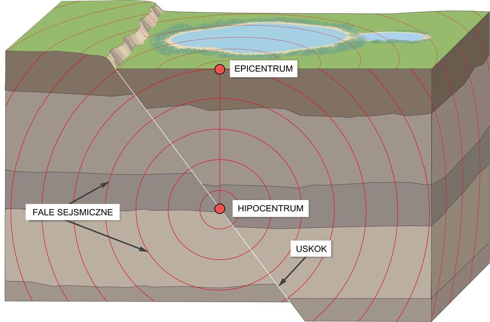Na ilustracji prostopadłościan – wycinek Ziemi. Kilka brązowych warstw Ziemi, na powierzchni trawa, zbiornik wodny. Zlewej strony pęknięcie, tędy przechodzi uskok. Prawa strona przesunięta nieco wdół. Pod ziemią czerwonym punktem zaznaczone hipocentrum trzęsienia ziemi. Dookoła okręgami zaznaczone fale sejsmiczne. Na powierzchni nad hipocentrum czerwonym punktem zaznaczone epicentrum trzęsienia ziemi.