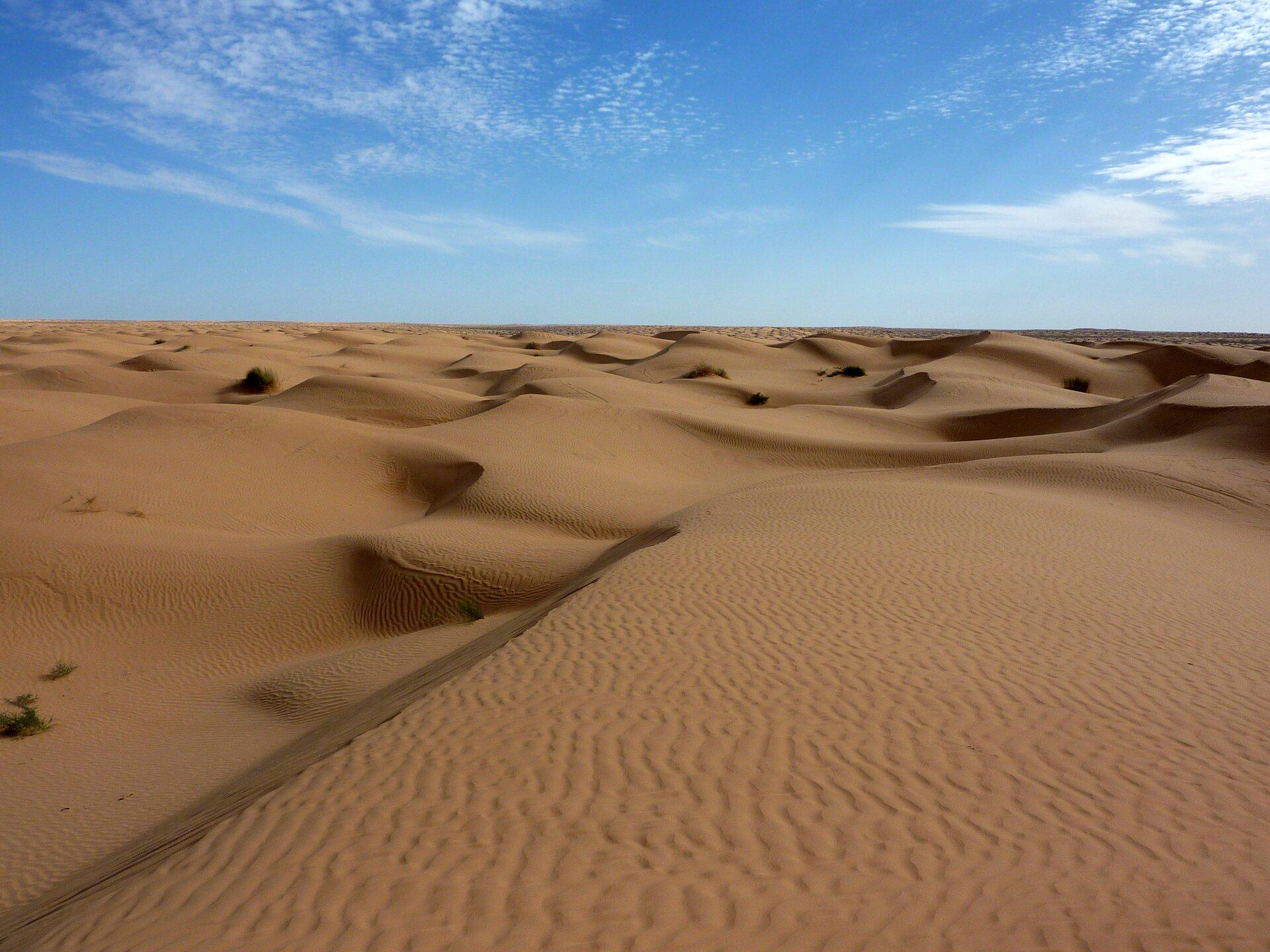 Na zdjęciu krajobraz gorącej, piaszczystej pustyni zwrotnikowej. Duże połacie drobnego piasku. Usypane wydmy. Pofalowana powierzchnia piasku. Niebieskie niebo. Nieliczne białe chmury.