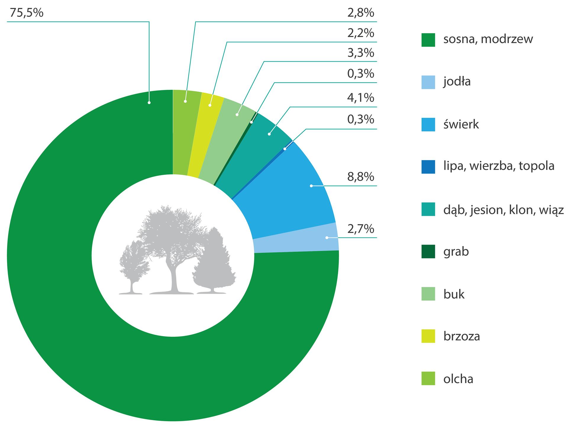 Wykres kołowy prezentujący udział różnych gatunków drzew wpolskich lasach. Wśrodku koła widnieją sylwetki trzech różnych drzew. Na obwodzie koła kolorami zaznaczono udział poszczególnych gatunków drzew: ciemnozielony – 75,5% sosna modrzew, niebieski – 8,8% świerk, ciemnoniebieski – 4,1% dąb, jesion, wiąz iklon, zielony – 3,3% buk, jasnozielony – 2,8% olcha, jasnoniebieski – 2,7% jodła, żółty – 2,2% brzoza, granatowy – 0,3% lipa, wierzba, topola, zielony – 0,3% grab