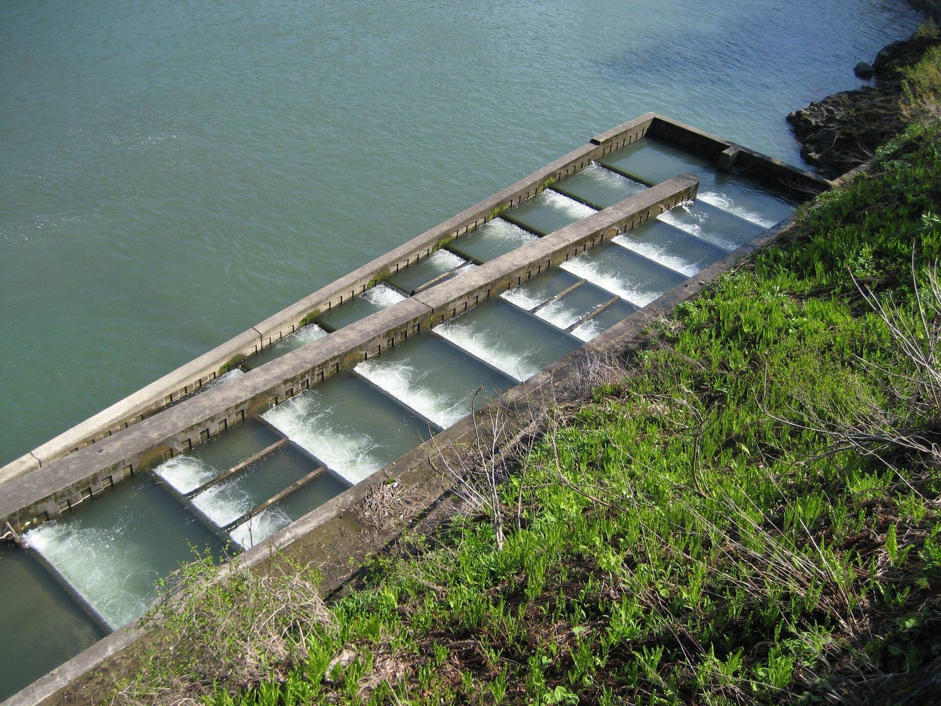 Fotografia przedstawia przepławkę dla ryb, umieszczoną wzdłuż koryta rzeki. Wgłębi ustawiona jest zapora zmetalowymi śluzami. Zlewej wybudowano schodkowo kolejne betonowe śluzy, którymi ryby mogą opłynąć przeszkodę.