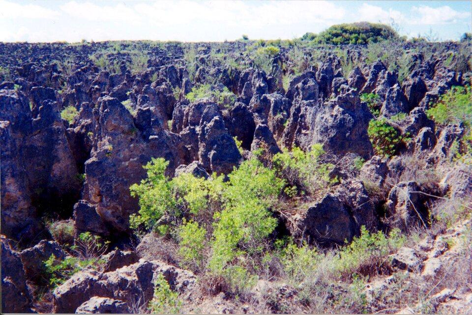 Na zdjęciu teren zniszczony wwyniku eksploatacji fosforytów. Duża ilość strzelistych ostańców oostrych krawędziach. Pomiędzy nimi skąpa roślinność.