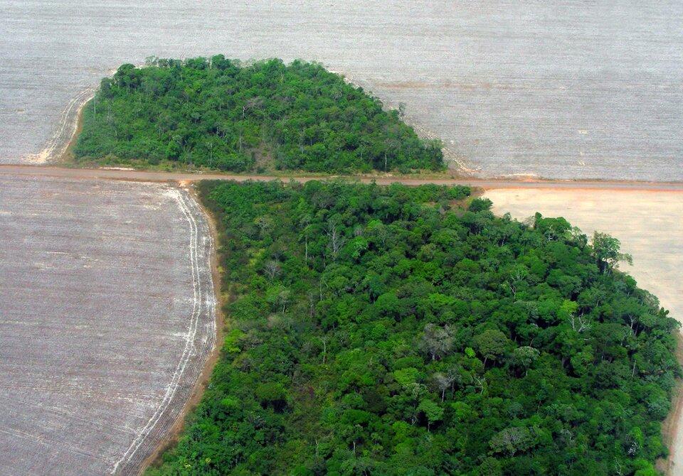 Na zdjęciu lotniczym rozległe, zaorane pole. Wśrodkowej części niewielka połać gęstego lasu.