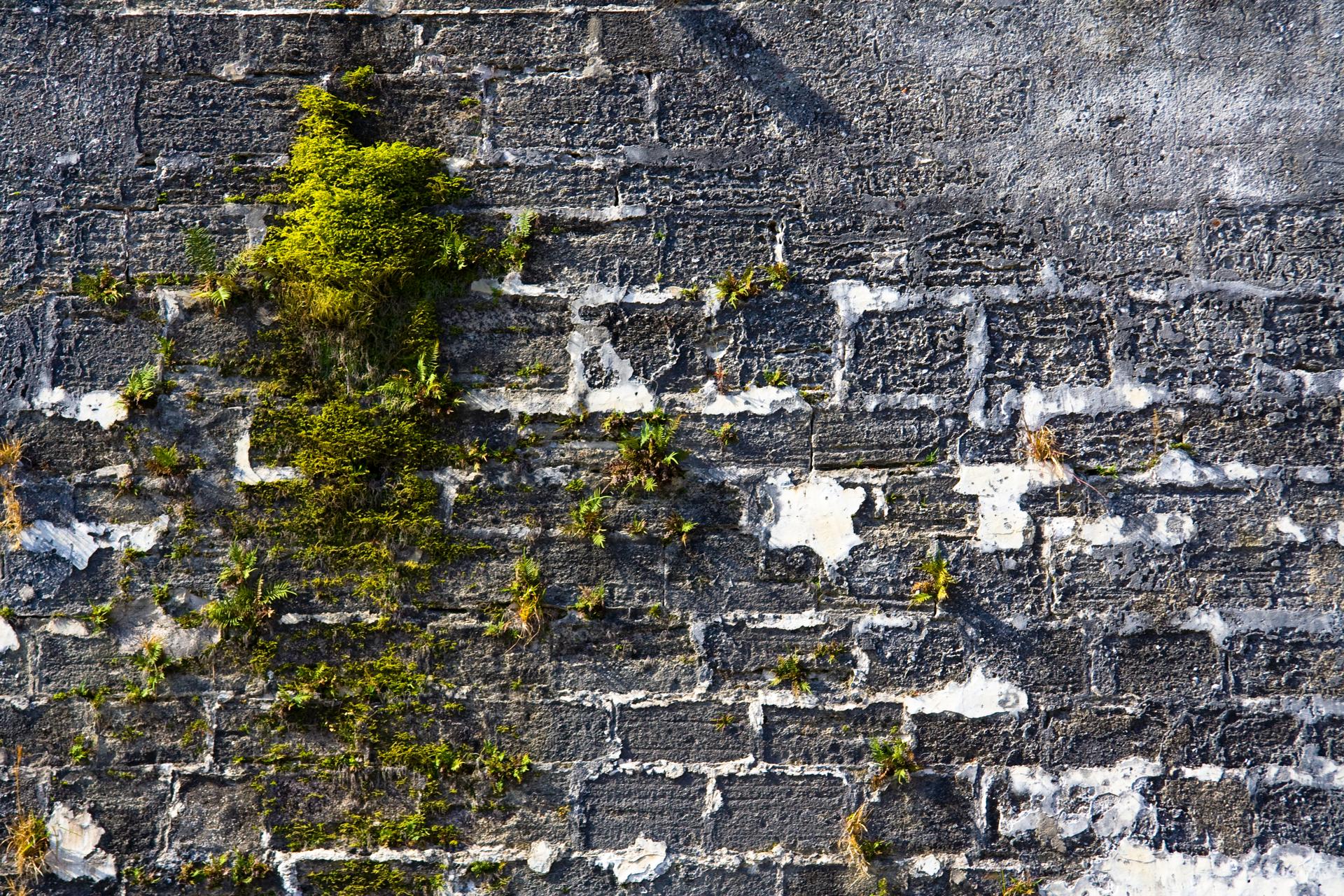 Fotografia przedstawia mur, zbudowany zszarych prostokątnych części spojonych białą zaprawą. Ze szczelin między nimi wyrastają jasno zielone kępy mchu.