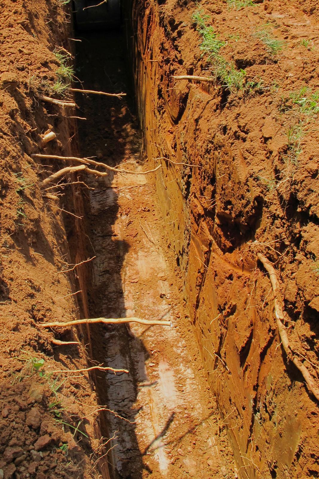 Fotografia przedstawia rów, wykopany wgliniastej, rudej ziemi. Zboków rowu wystają korzenie roślin. Może on stać się pułapką dla płazów, które nie będą mogły się wydostać po wysokich, gładkich ścianach.