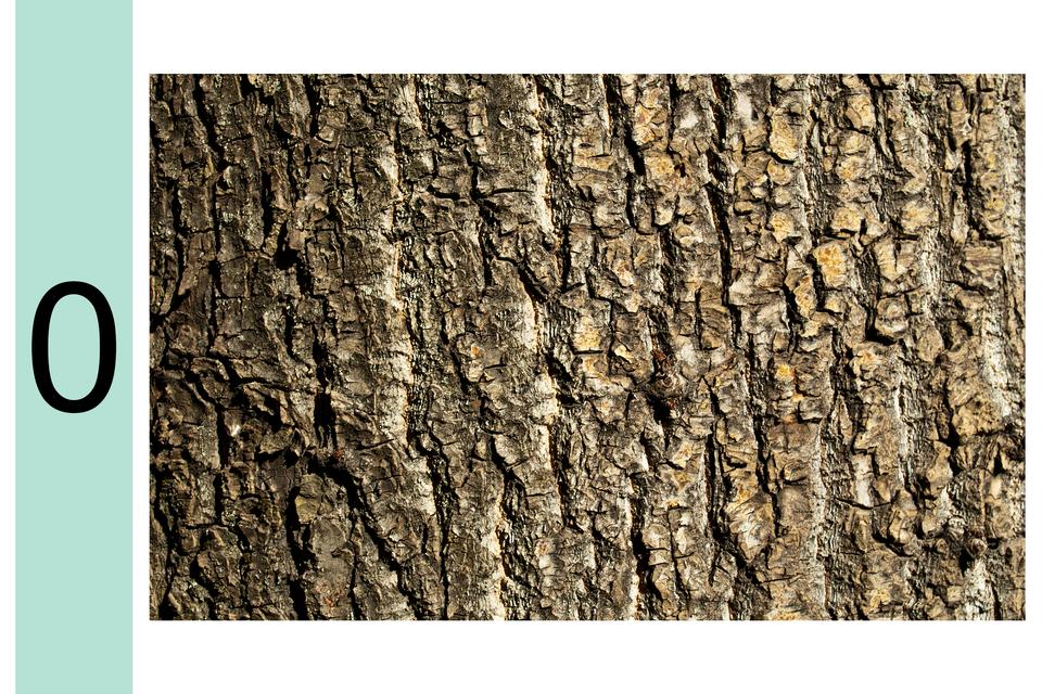Galeria fotografii pozwalających ocenić stopień zanieczyszczenia powietrza przy wykorzystaniu skali porostowej. Fotografia prezentuje stopień 0 wskali porostowej. Na korze drzewa brak porostów.