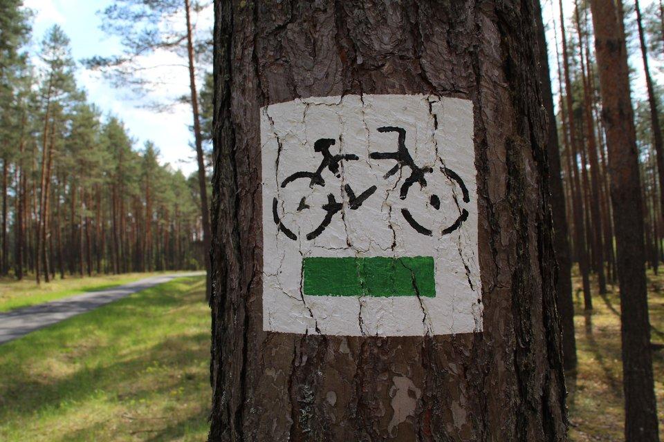 na zdjeciu widac pień drzewa, na którym widnieje biały prostokąt znamalowanym rowerem apod nim zielonym pasem (znak szlaku rowerowego)